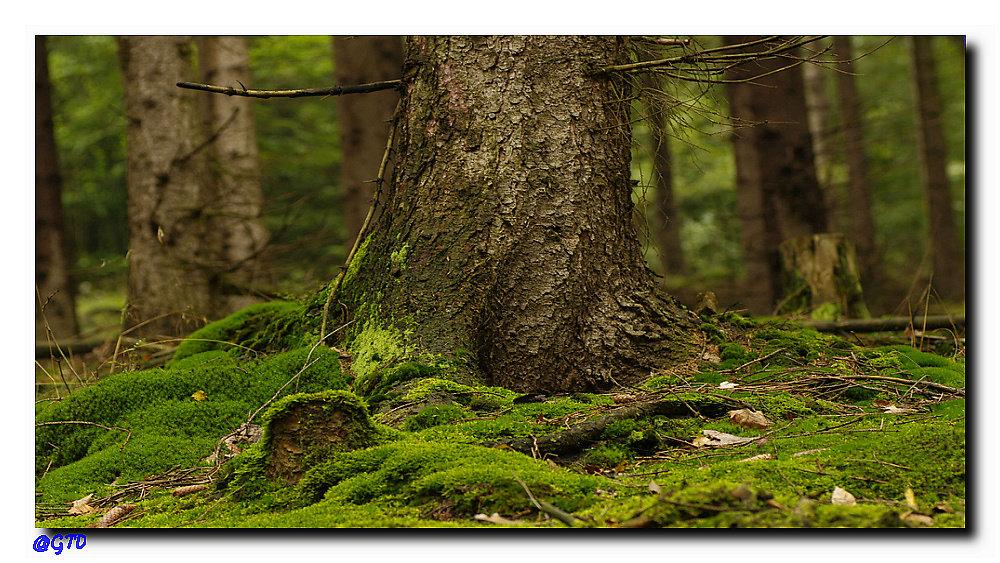 Harzer Moorwald